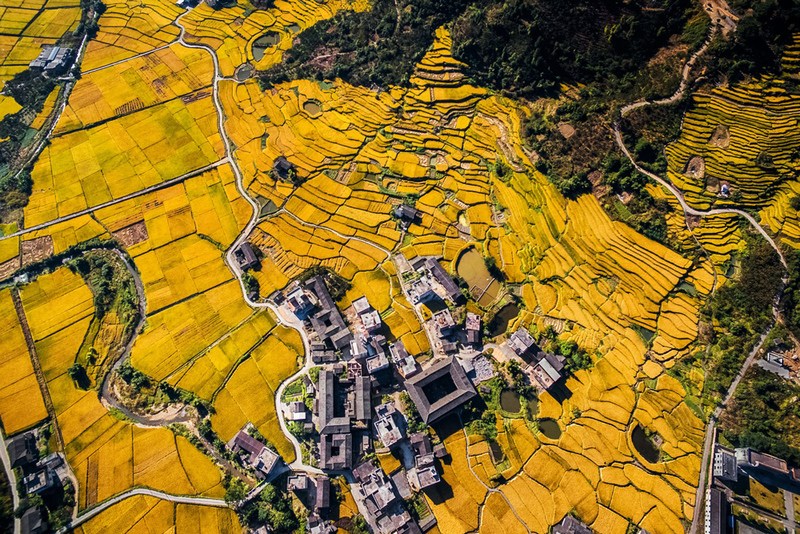 Drone Camera Captures Beautiful Aerial Image Of A Yellow Landscape Winner SkyPixel Competition