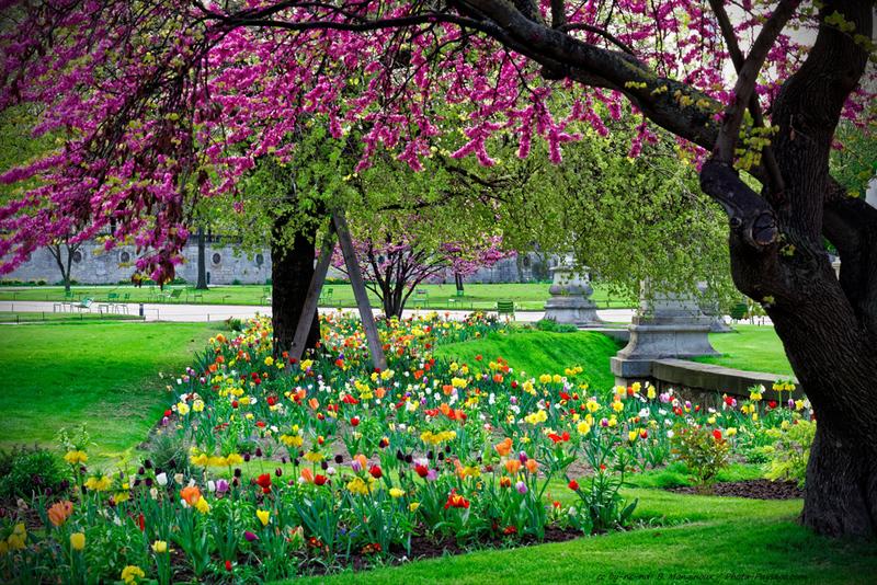 Spring colors in Paris at Jardin des Tuileries.