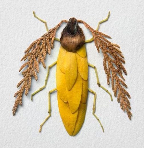 content_Image_by_Raku_Inoue_Natura_Insects_Series_3_Autumn_Special_Antler_Antennae_Beetle.jpg