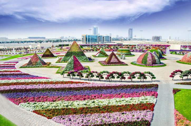Impressively Maintained In Such A Dry Desert Region Near The Arabian Ranches Dubai Miracle Garden Contains Not Only Traditional Flower Beds