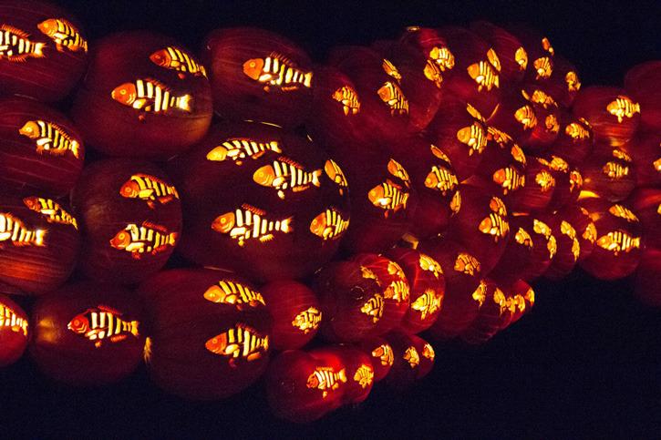 Awesome Orange Pumpkin Festivals Happening Now Beautifulnow