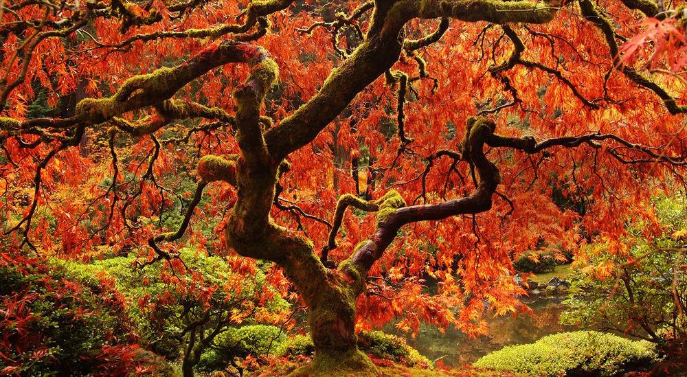 Beautiful Cherry Trees in Kyoto, Japan : pics |Beautiful Japanese Trees