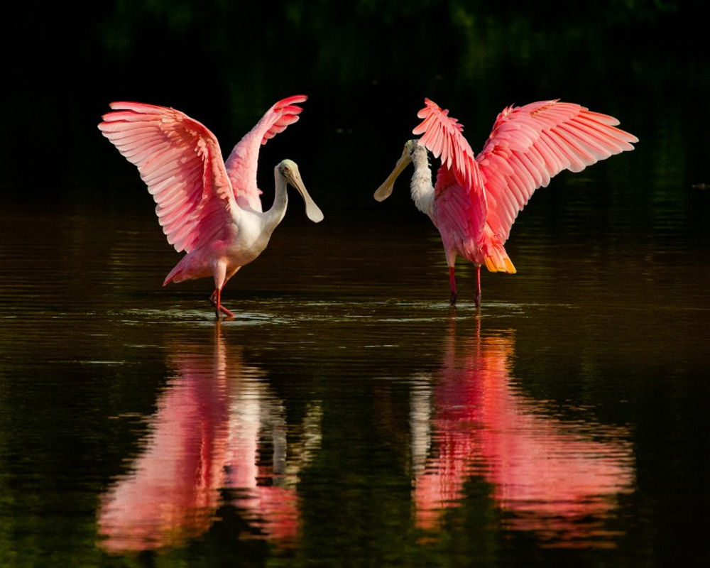 10 Beautiful Pink Animals to Marvel at Now | BeautifulNow