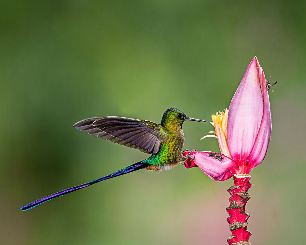 Most Beautiful Images Quotes Ideas Inspired By Birds