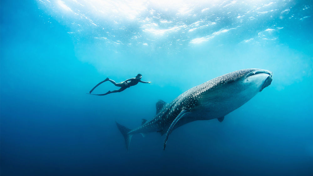 Giant Whale Swims With Hanli Prinsloo Founder Of I Am