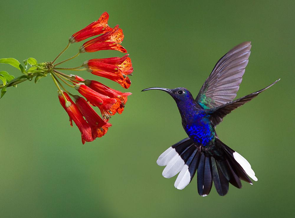 Ultraviolet birds